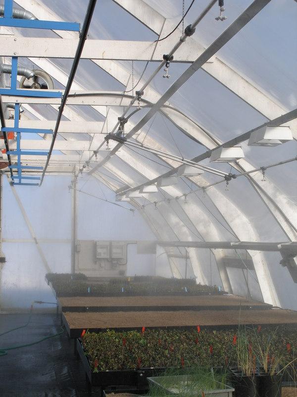 Kylning och befuktning i växthus. Coolnet Pro både sänker temperaturen och fuktar växterna på samma gång.