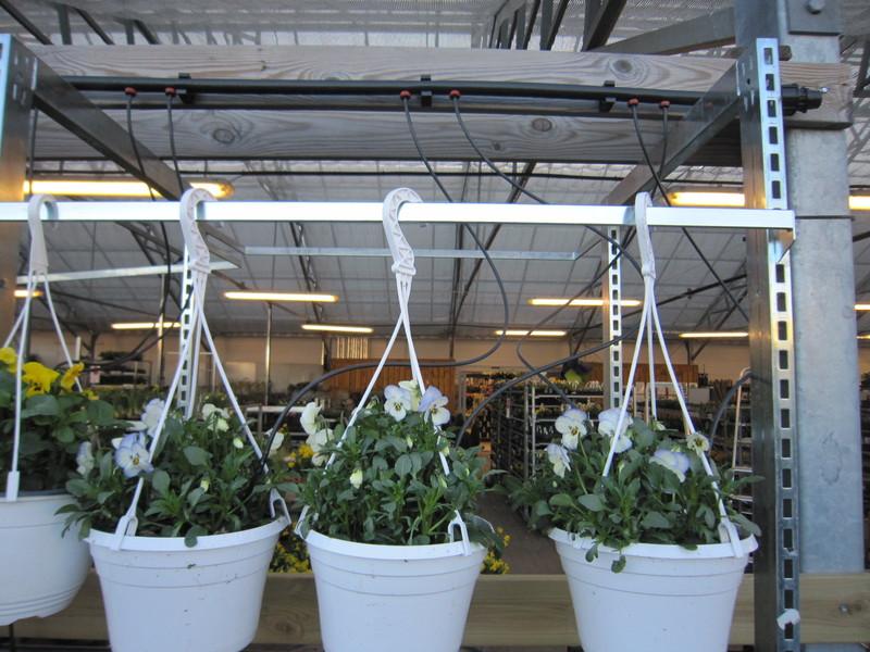Ampelbevattning med PCJ droppknappar, slang och pinne, Gardencenter