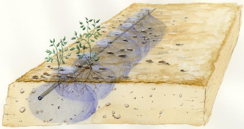 Illustration av droppbevattning under jord