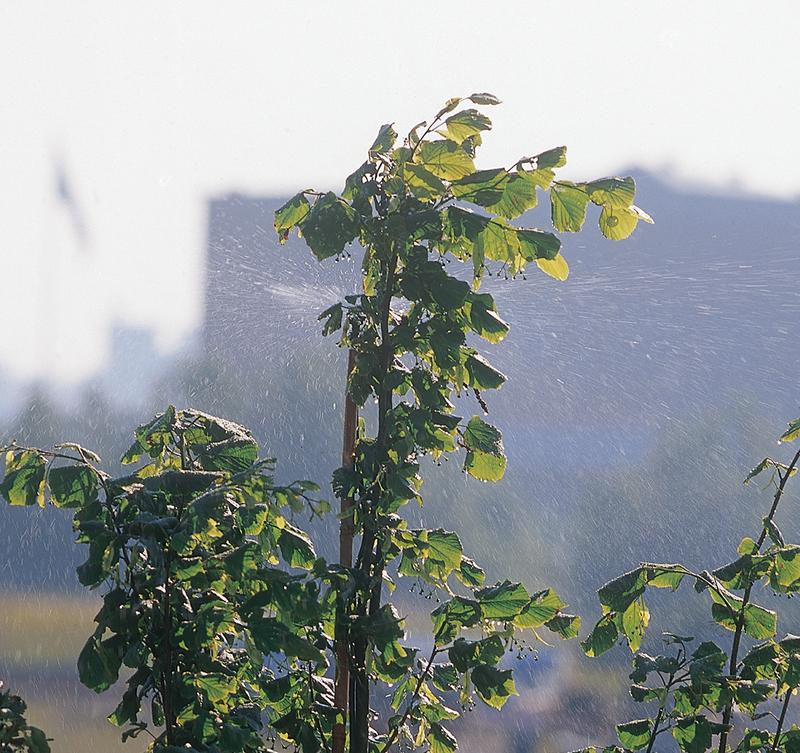 Befuktning i bladverket på träd